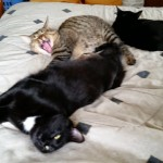Ren's Three Kittens Lounging on Bed