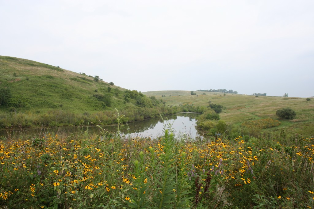 An experimental plot of native prairie plants at The Wilds, a reclaimed mine site in South Central Ohio.