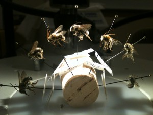 Jessie's bees