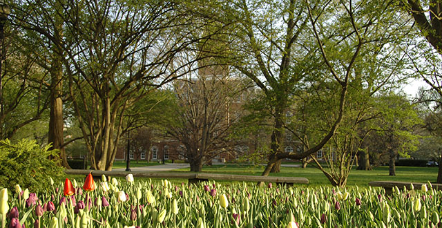 University Hall with tulips in the foreground