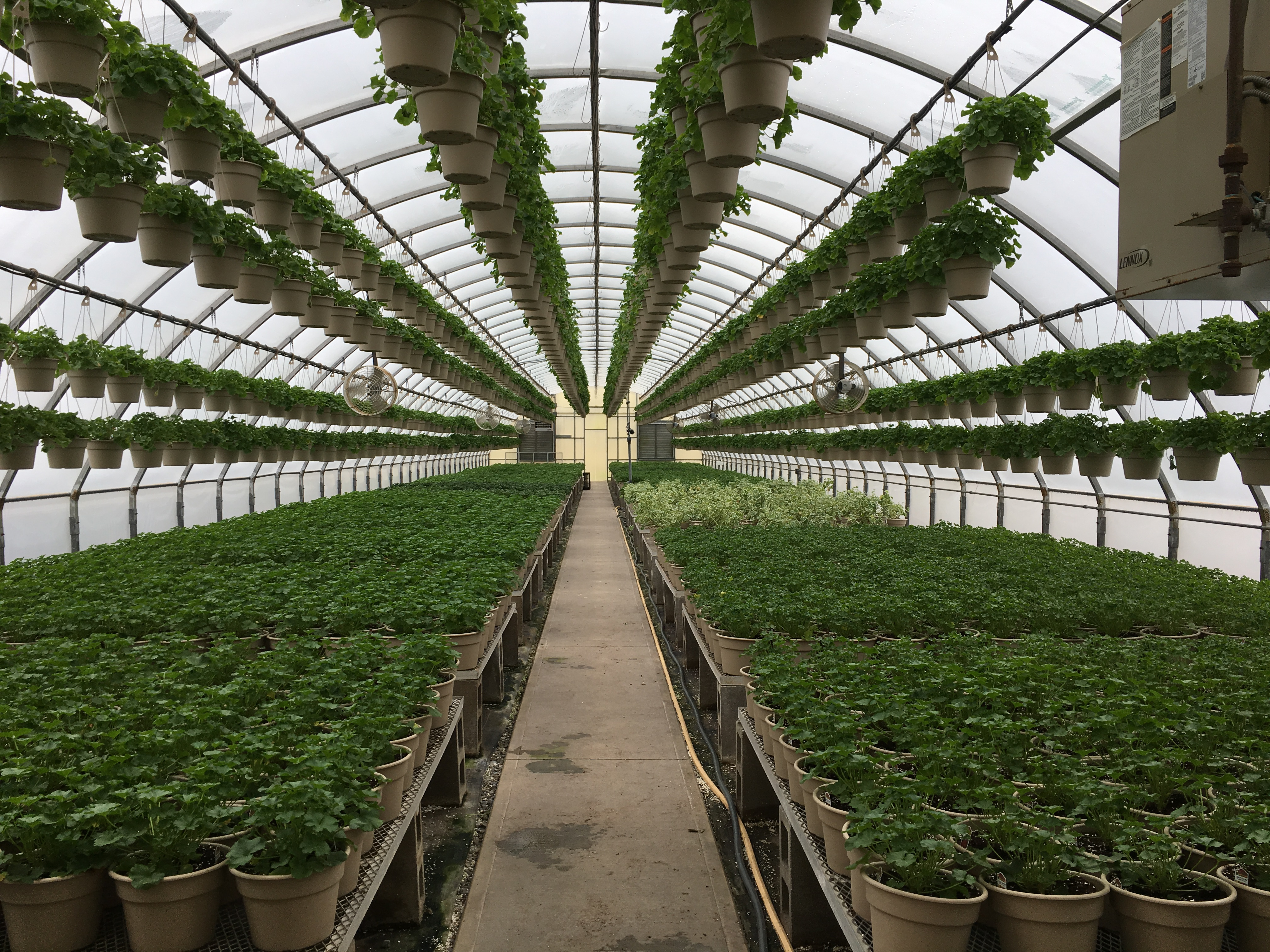 Greenhouse gurus design solutions for your greenhouse needs - Strader s garden centers columbus oh ...