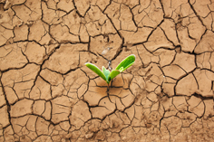drought image with seedling for GB