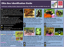 bee ID guide 2