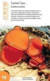 New Ohio mushroom book