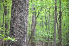 hardwood trees for CN