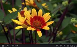 pollinator video