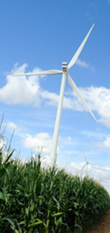 wind turbines in corn field for GB