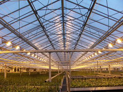 greenhouse for GB