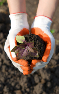 soil and seedling for GB