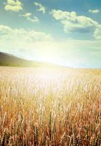 sun on farm