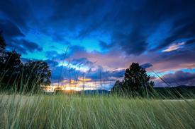 grasslands and woods image 2
