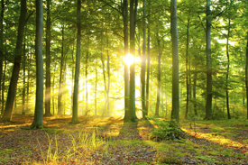 image of forest at dawn