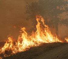 image of wildfire 2