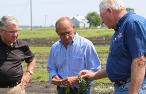 Muck Crops field day CFAES, OARDC,