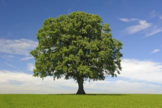 Tree School 2