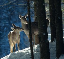 Workshop on woodlands and wildlife