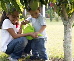 Growing School Garden