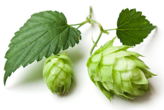 Topurs of hop research
