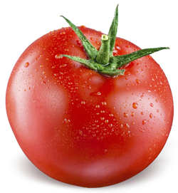 Organic Vegetable Tour