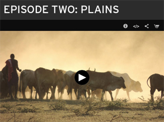 Plains episode of Earth A New Wild