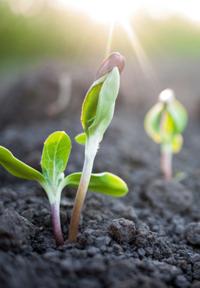 Restoring soil 2