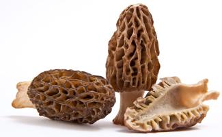 Picture of morel mushrooms