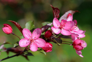 OARDC Secrest Arboretum Wooster Campus OSU Roses of Legend & Romance