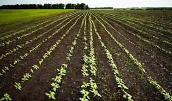 Image of farmers field