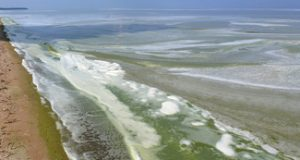 Image of algal bloom