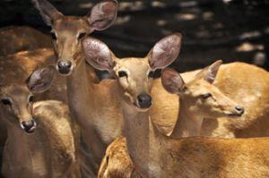 Group of deer in zoo