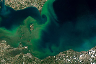 Satellite image of Lake Erie algal bloom