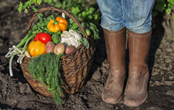 vegetables into the old basket and feet in rubber boots