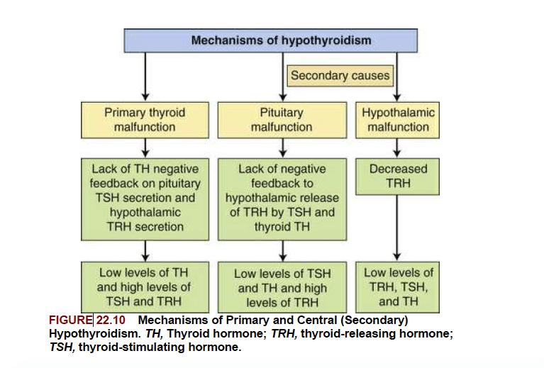 Pathophysiology Clinical Presentation And Diagnosis Hashimoto S