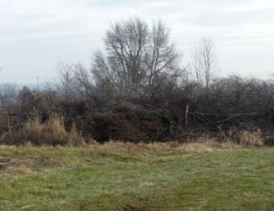 brush pile at Waterman Farm