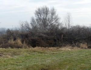 brush pile at Waterman Farm