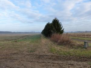 tree-line at Waterman Farm