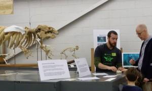 manatee skeleton