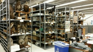 Picture of Tetrapod shelving units full of their mounted bird specimens
