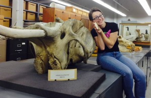 Sarah poses with the Asian Elephant skull