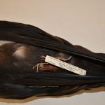 close-up of label of bird specimen