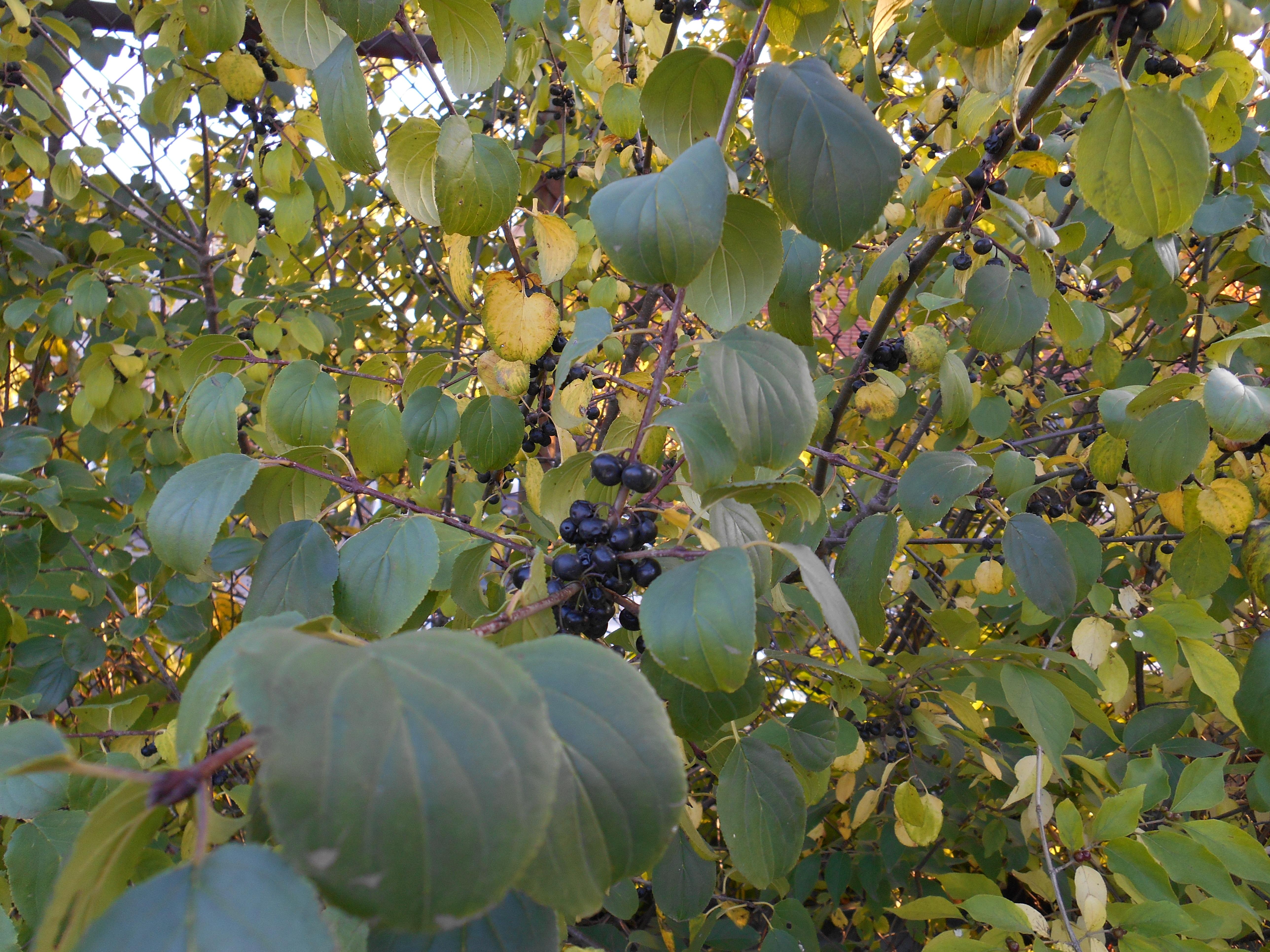 Columbus Plants Scavenger Hunt Ohio Plants Eeob 2210