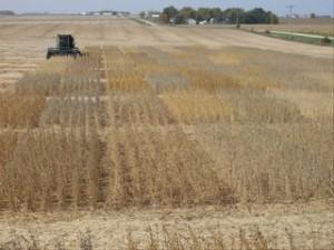 Soybean Test Plot