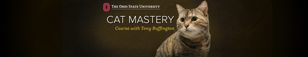 Cat Mastery Banner 1 - Proof