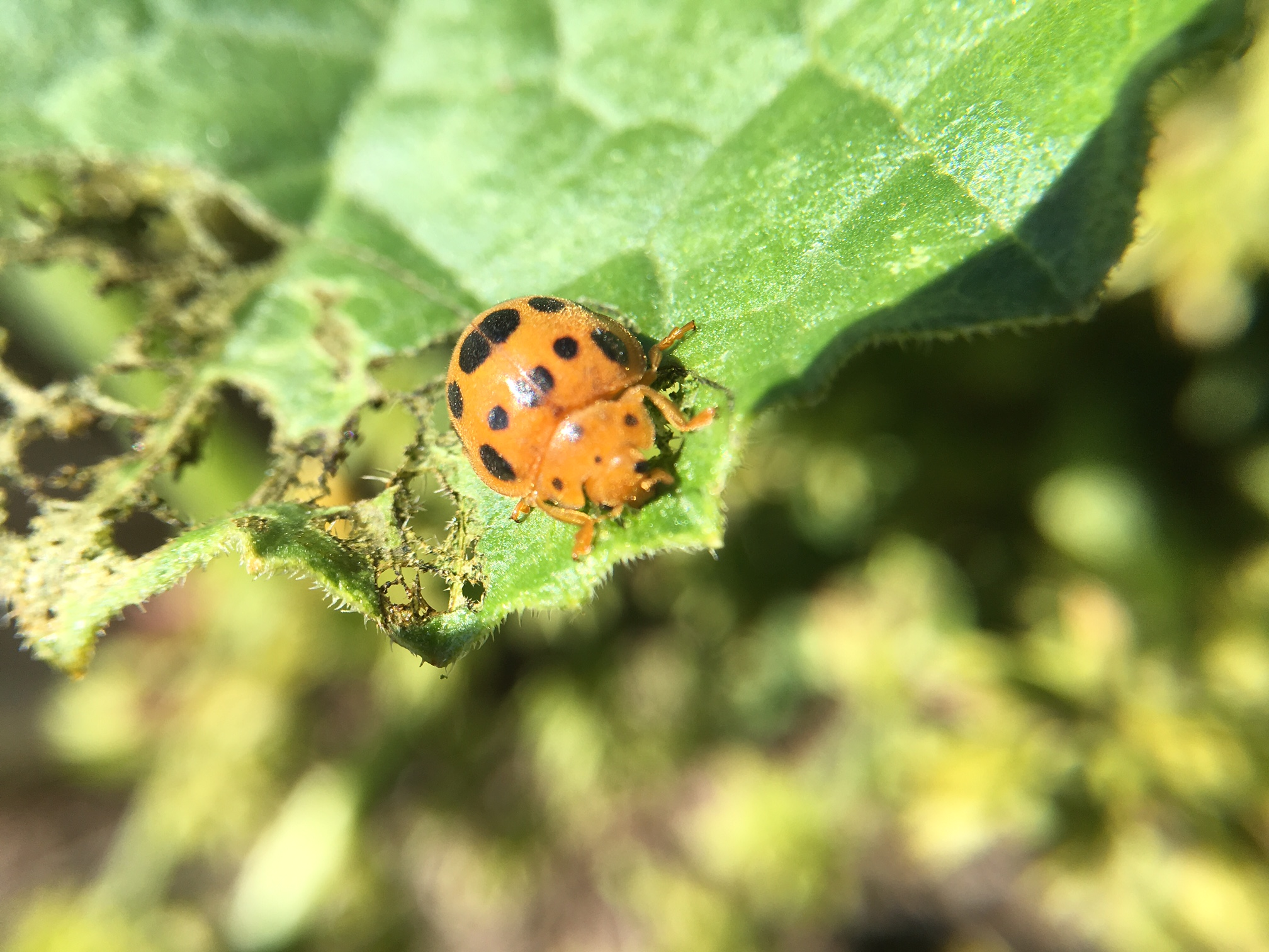 insects vegnet newsletter