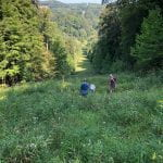 Liam Whiteman and Dr Jamie Strange, netting bees on a wildflower-covered slope.