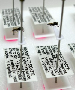 Detailed specimen labels.