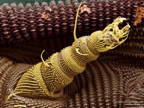 Leg of <i>Osperalycus tenerphagus</i>, LT-SEM