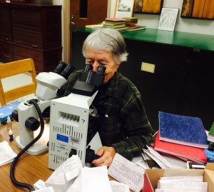 Bryophytes are small plants and often require the use of dissecting and compound microscopes to view diagnostic characters. Here, bryologist, Diane Lucas, uses the compound microscope to view the shape and size of the leaf cells of a moss.