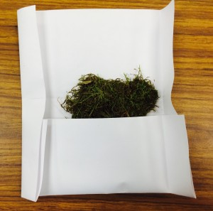 An open packet showing moss plants stored inside.