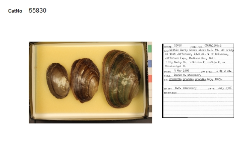 Digitized specimens and label